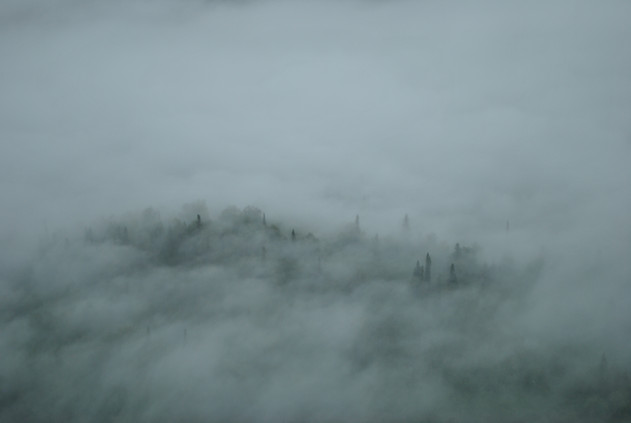 Alaskan Trees through the Fog