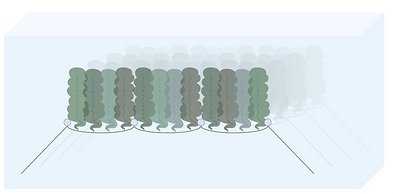Seaweed forest asset 2.png
