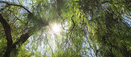 zon door bomen.1.png