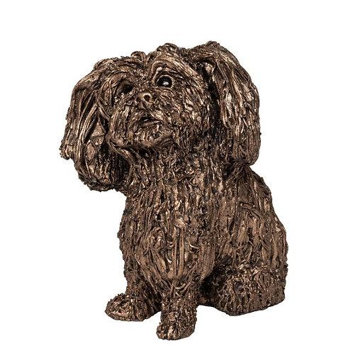 Sprout - Shih Tzu puppy