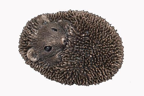 Zippo-Baby Hedgehog Asleep