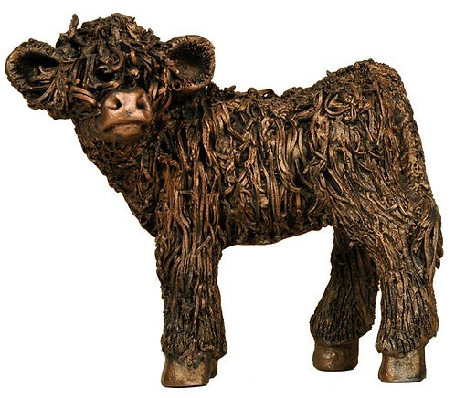 Highland Calf Standing