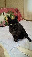 泉谷行政書士事務所・泉谷海事代理士事務所の看板猫かりんの画像