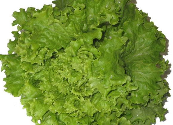 Green Leaf Lettuce (per head)