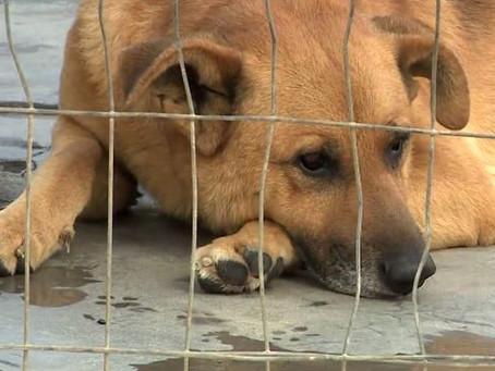 Vereadores de cidade de SC aprovam projeto de lei que proíbe barulho de animais