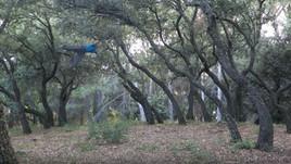 Les arbres de Couvent
