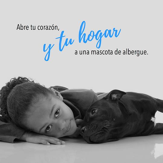 Foto adopcion generico.png