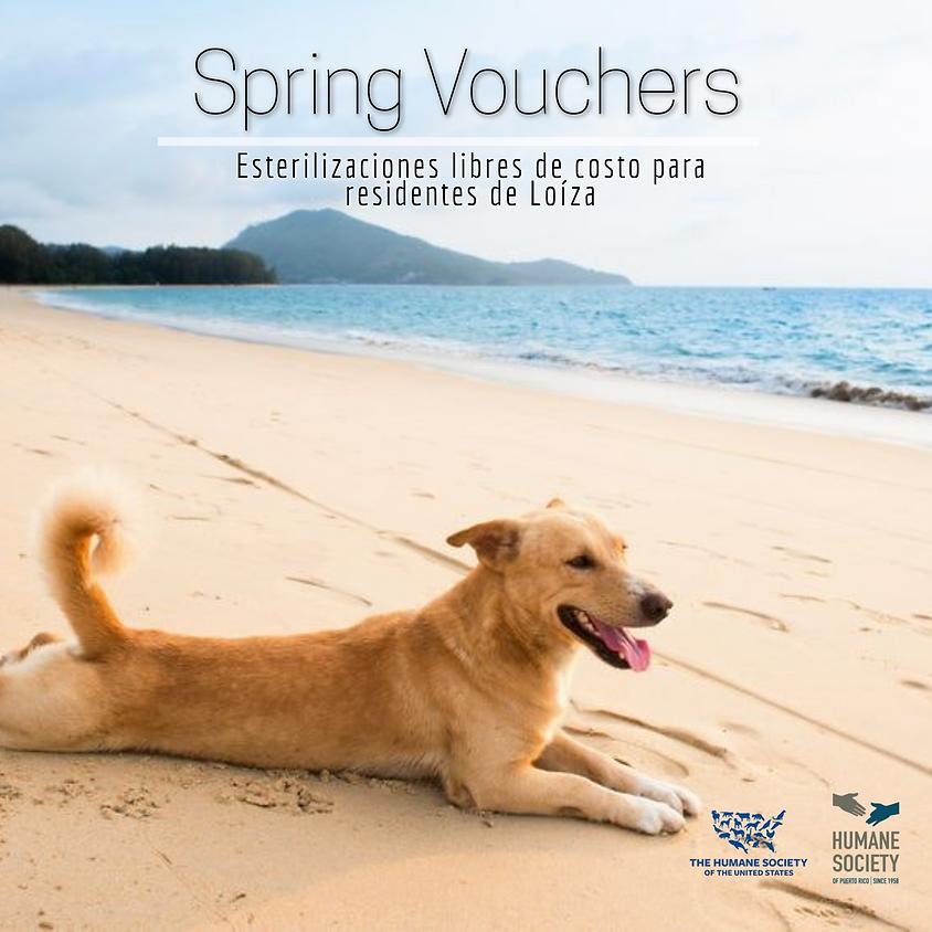 Spring Vouchers