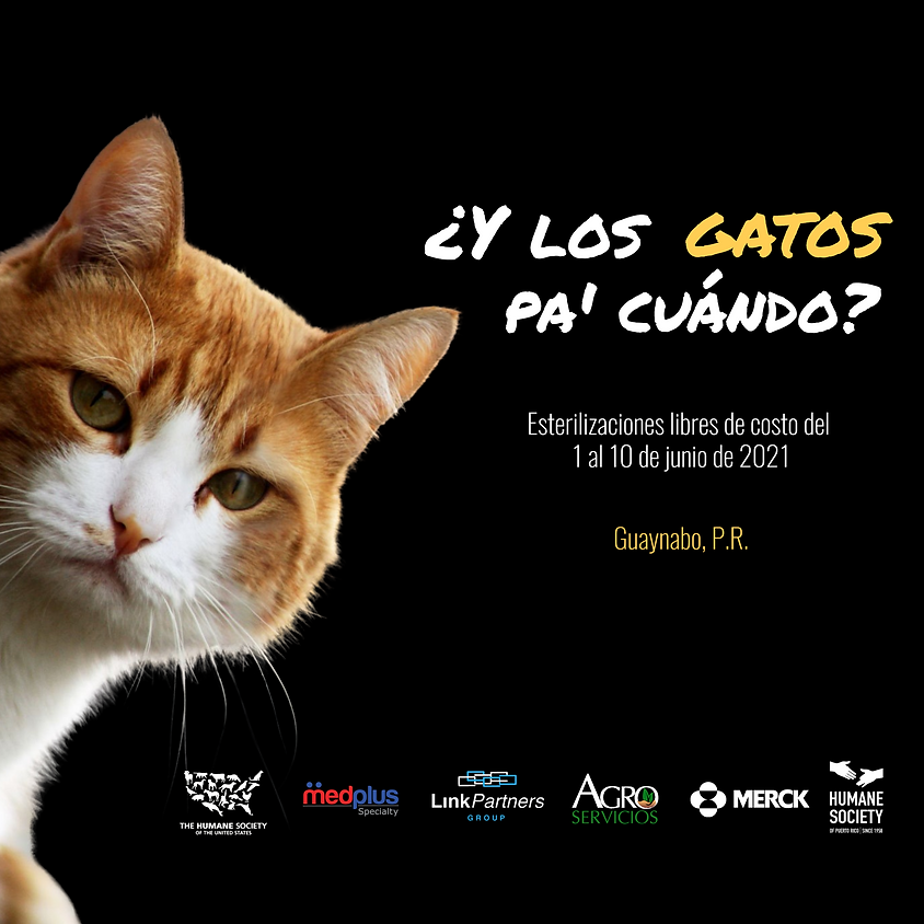 ¿Y los gatos pa' cuándo?