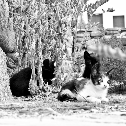 Baby Greek cats