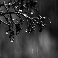 Solitude drops