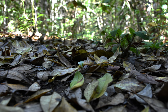 path of dry leaves