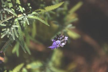 Lavender oasis