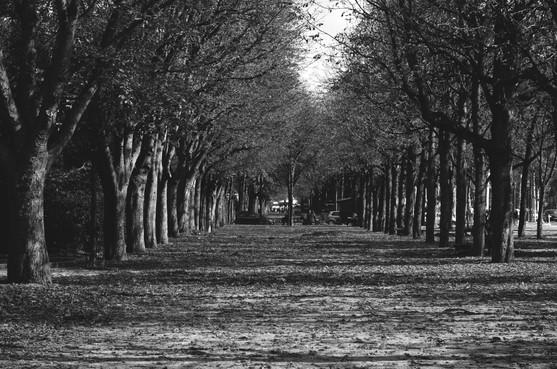 Jardins des Champs-Élysées