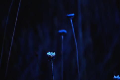Moonlight VII