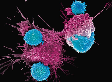Cancer Immunotherapy Discovery and Development