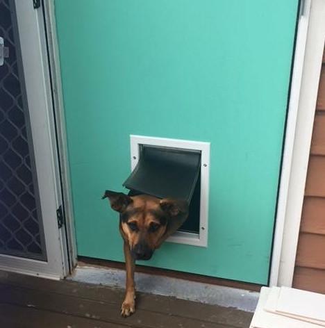 Purrfect Pet Doors supplied & installed this medium pet door into owners wooden door