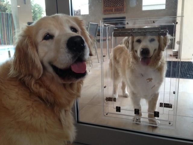 Purrfect Pet Doors Wangara Glass Dog Cat Door Installation Perth
