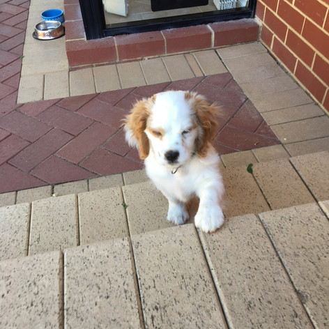Bailey and His petway pet door