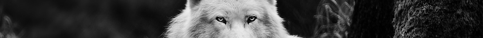 wolf cover.png
