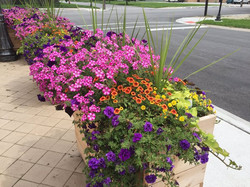 The patio flora.