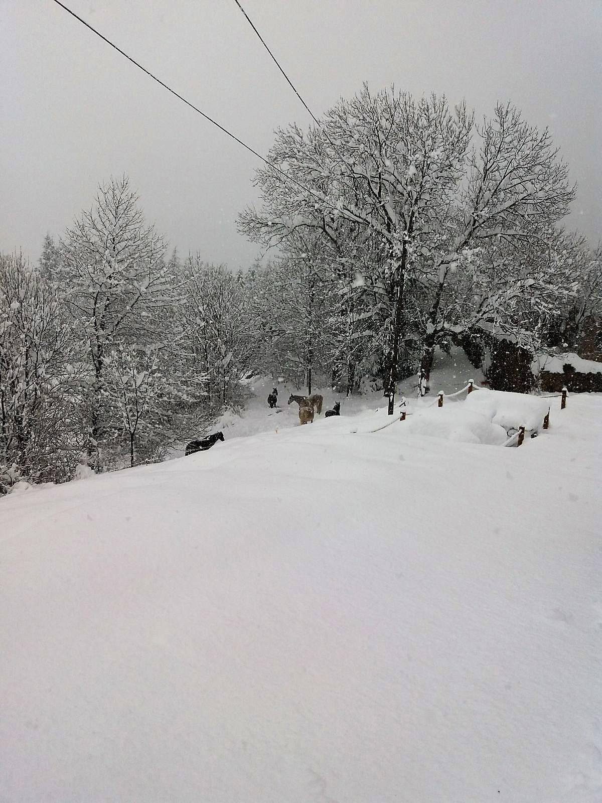 nevada mirador i cavalls
