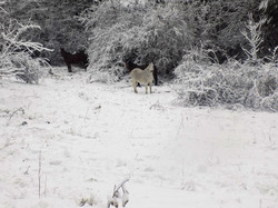 neu cavalls