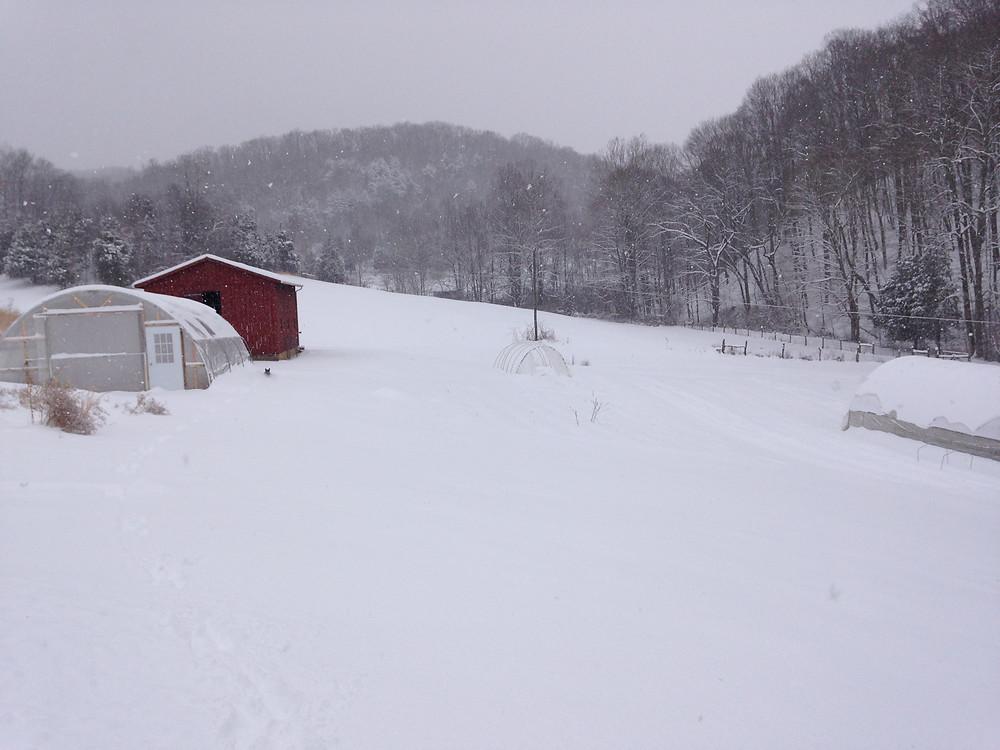 Snow-covered hoop houses