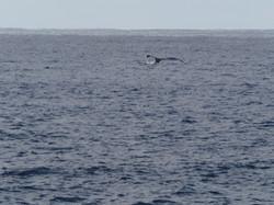 〜Whale〜
