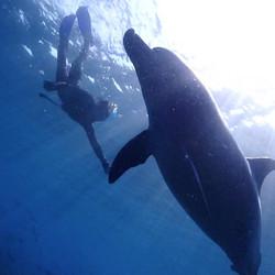 〜Dolphin〜