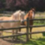 Sweet ponies... #faithfarm #farmlife #fr