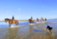 tofo beach horse riding