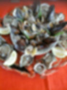 Oysters fresh from the indian ocean