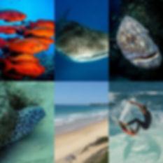 marine life mozambique