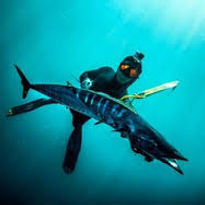spearfishing tofo
