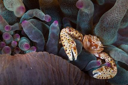 crab, mozambique