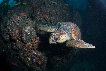 turtle guinjata bay, mozambique