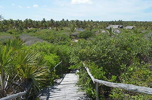 mango beach walkway