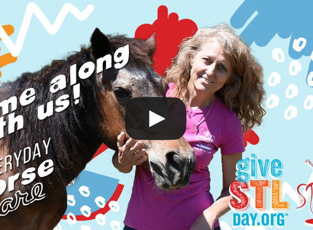 Give STL Day Feature, Video Horsecare Tour
