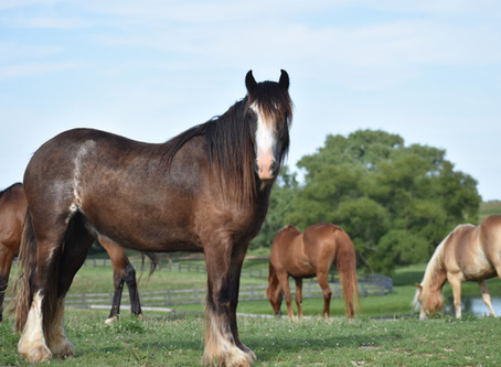 Gracious Guests at a Thoroughbred Breeding and Training Facility