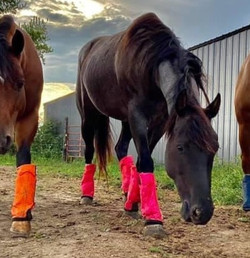 JULY FEATURED WISH! Shoofly Fly Boots, Pink Size Large
