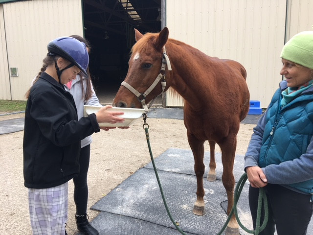Ride On St. Louis therapeutic riding client feeds her horse