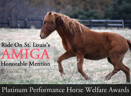 EQUUS Foundation Awards and Grants