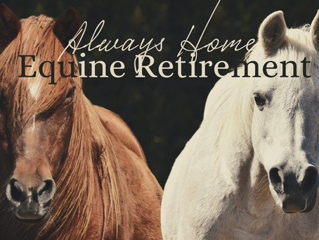 Always Home | New Sanctuary Program for Retired Equines