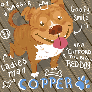 copperdoh2018.png