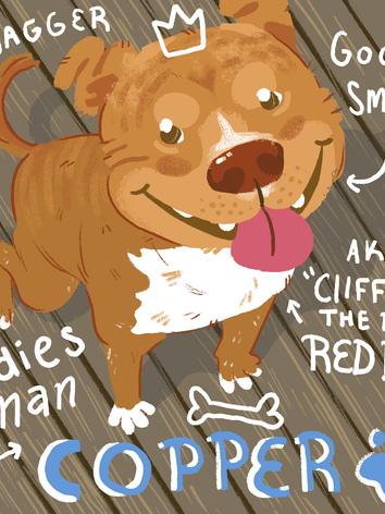 Copper - Shelter Dog