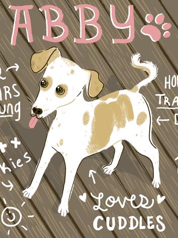 Abby - Shelter Dog