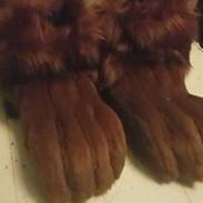 squirrel feet paws