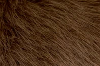 Chocolate Howl Fox - Half Yard Piece