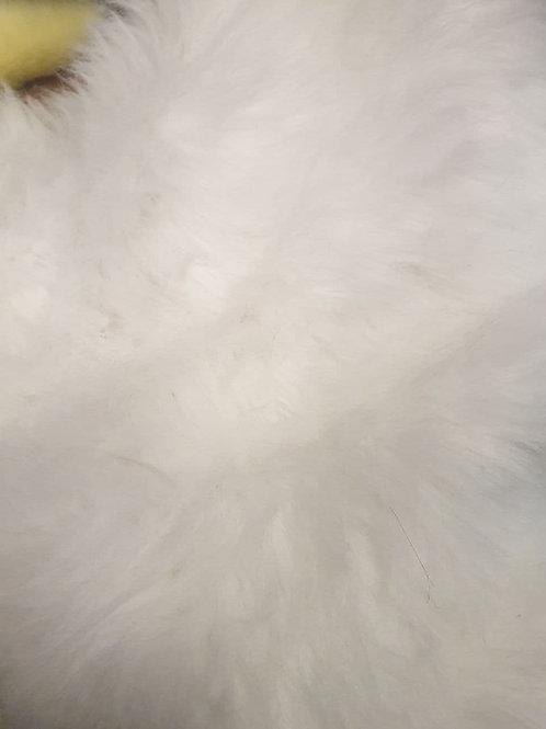 White fluffy longpile